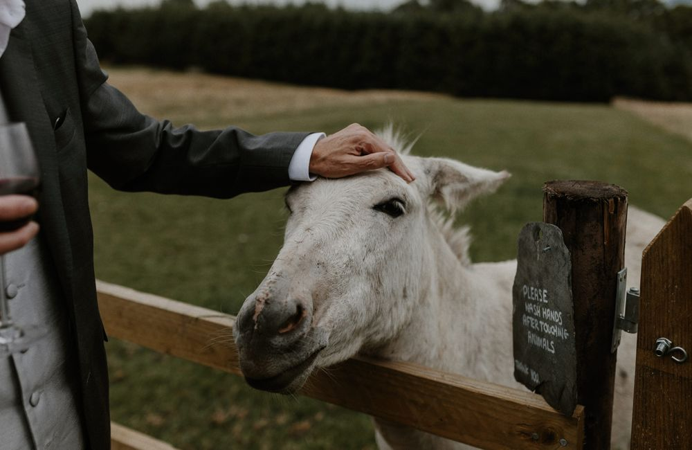 Hugo the Donkey with a groomsman