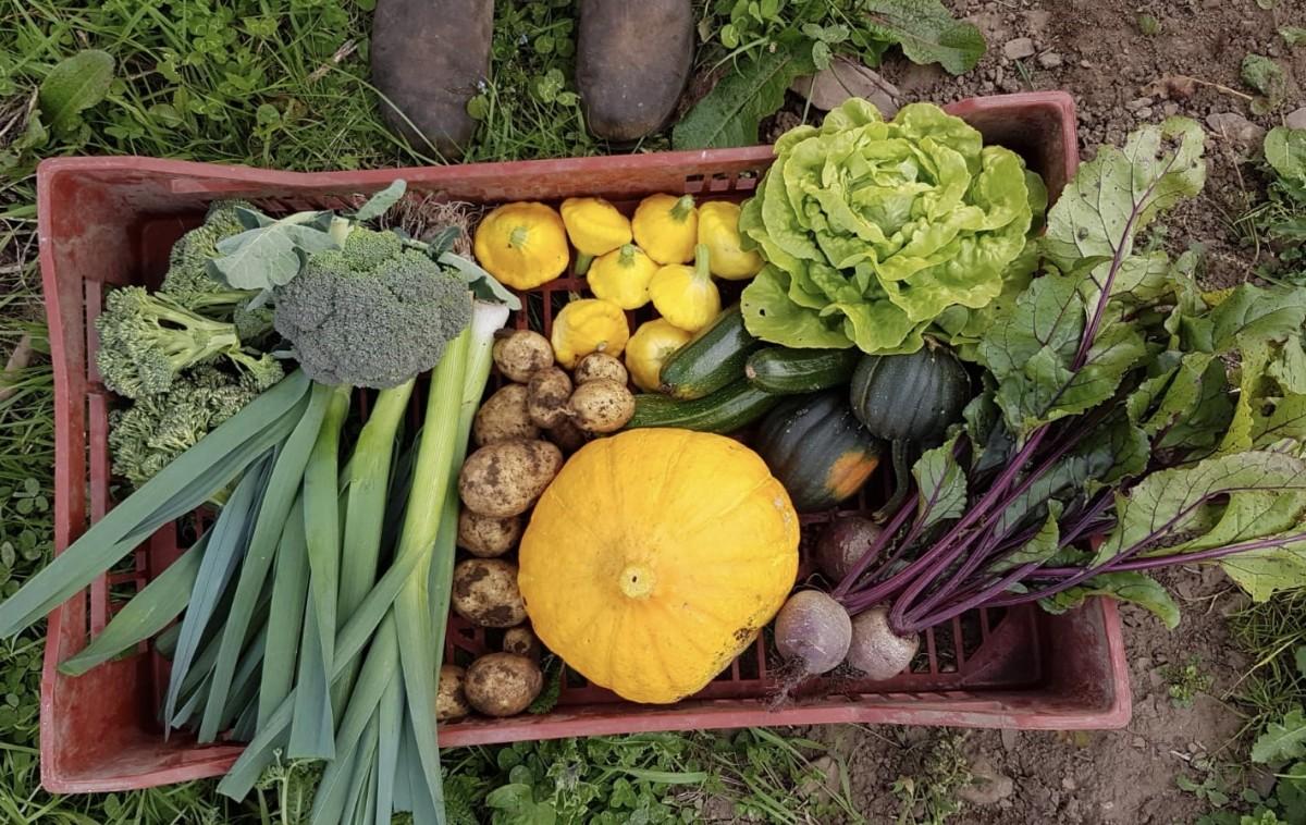Cornucopia of late summer vegetables