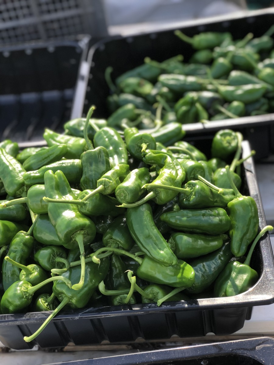 padron peppers as far as the eye can see